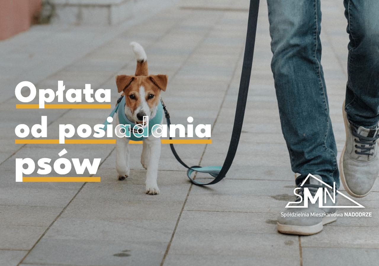 Dwie stawki opłaty od posiadania psów w Głogowie